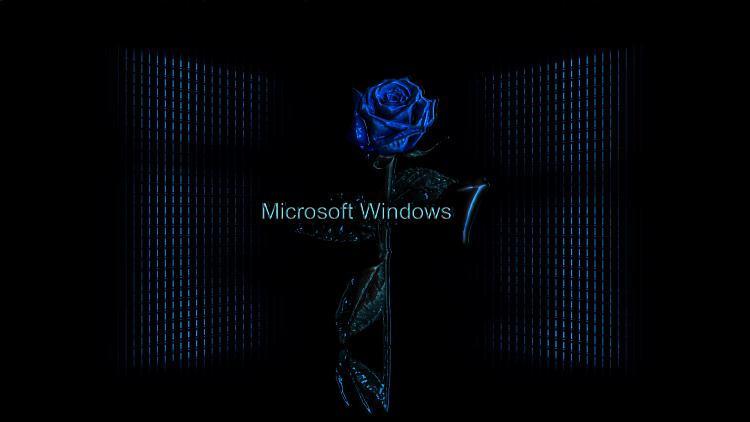Custom Windows 7 Wallpapers - The Continuing Saga-blue_rose_wall_7dw1.png