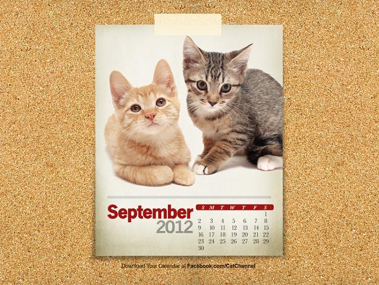 -cat-small.jpg