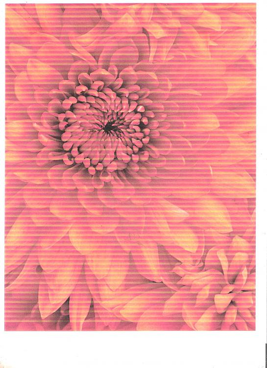 HP 7260 PhotoSmart Printer-7260-flower.jpeg