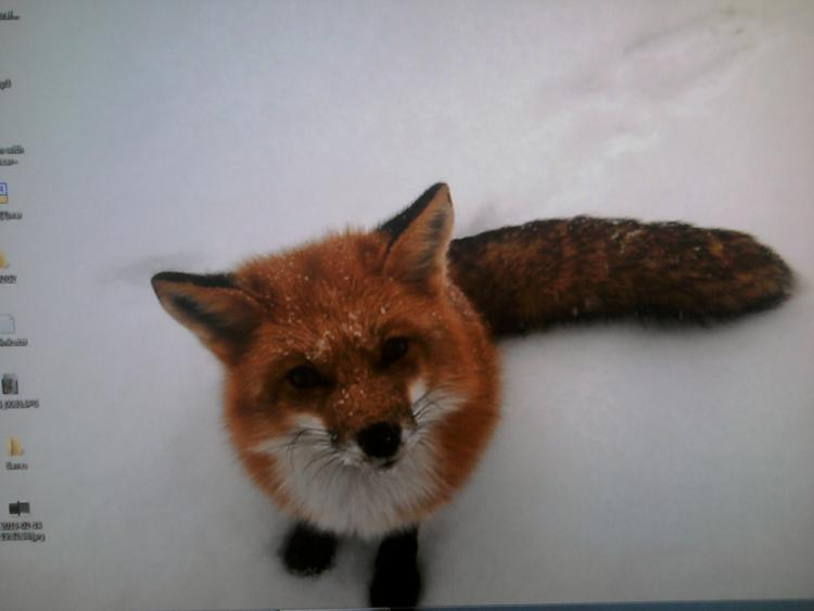-monitordifference_foxnew.jpg