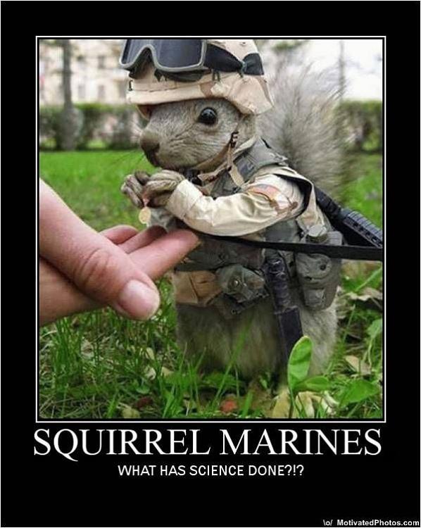 HP 950 PSC - Cannot Print Photos!!!-633502079247460928-squirrel-marines.jpg