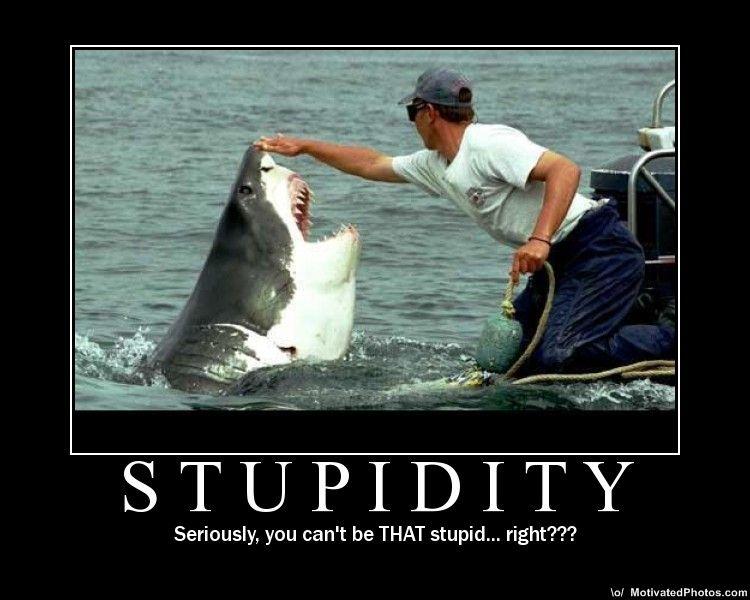 Media Player 12 - Media Streaming Issue-633502856672540378-stupidity.jpg